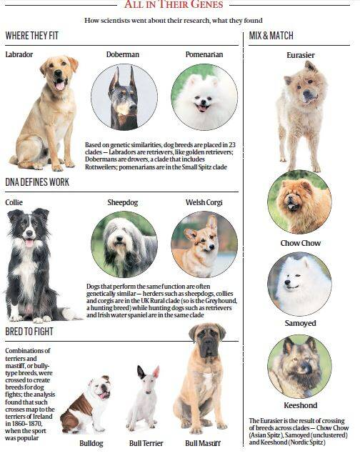 The family tree of dogs | Technology News, The Indian Express