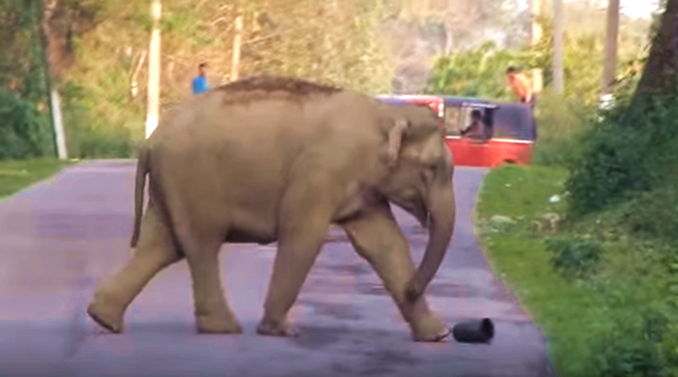 elephant, elephant viral video, elephant playing football, football match of an elephant, viral video in assam, trending video, latest video, indian express, indian express news