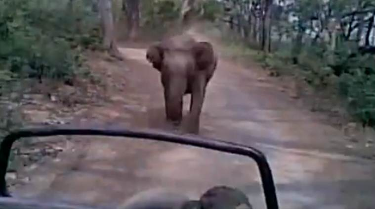 Watch: Narrow escape for tourists as elephant chases vehicle at Jim Corbett National Park