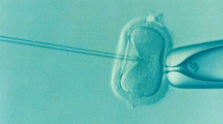 One million babies born in US using IVF:Report