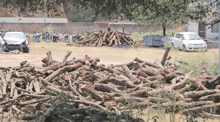 Keep us in loop before acting against our men, says forest officer to HaryanaDGP