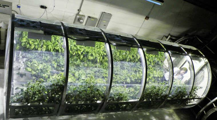 greenhouse space station -#main