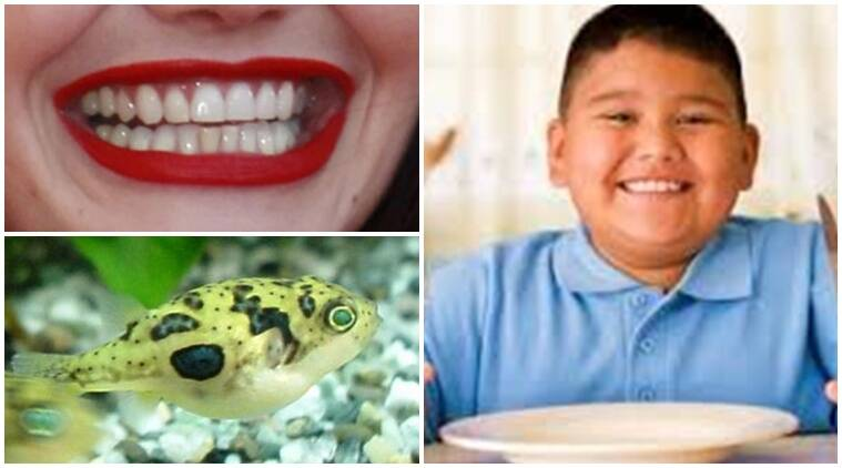 teeth and genes, pufferfish, pufferfish teeth, teeth growth, teeth research, discovery of fish, latest research, research on human teeths, Indian express, indian express news