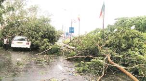 Evening storm in Ahmedabad uproots trees, hits traffic ahead of PM's visit