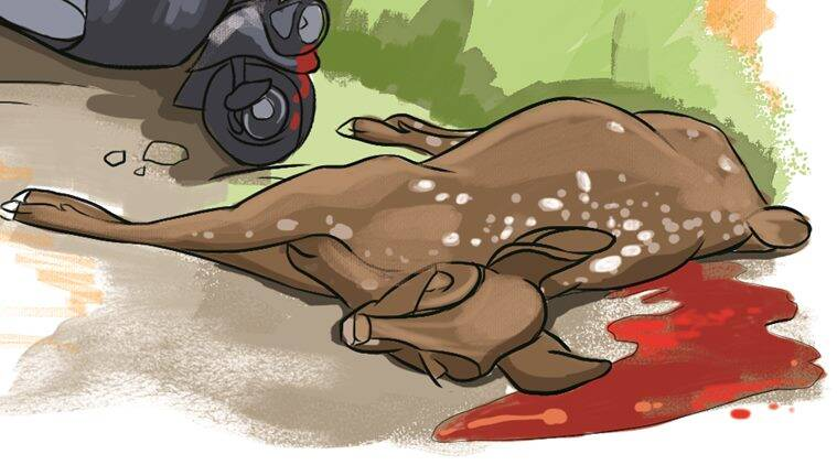 spotted deer, Spotted deer accident, spotted deer death, mumbai spotted deer, mumbai news, indian express news