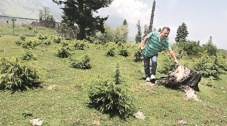 kashmir, kashmir man, kashmir valley, kashmir valley trees,Abdul Hamid Bhat,batamaloo man,