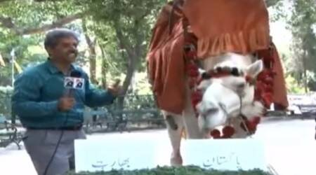 India vs Pakistan: This camel predicts Pak will defeat India in ICC Champions Trophymatch