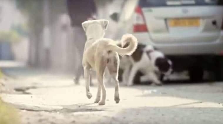 short film, imtiaz ali short film, dogs short film