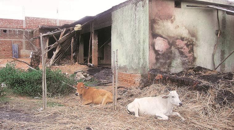 jharkhand man beaten up, jharkhand man attack, cow, dead cow, Giridih cow dead,