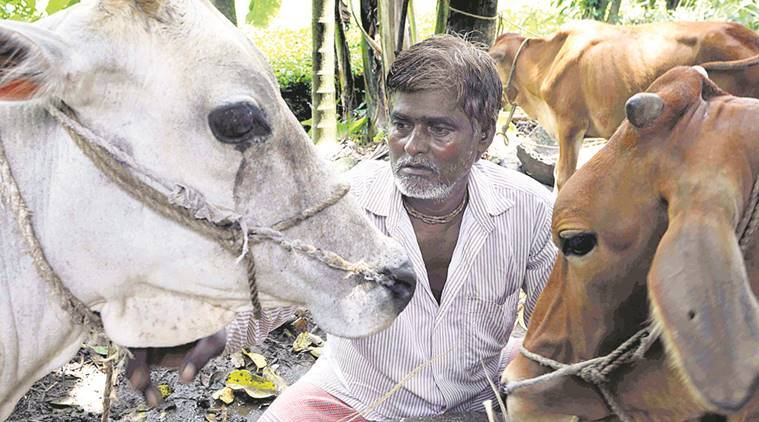 bengal lynching, lynching in bengal, cattle thieves, cow smuggling, cow protection, north dinajpur, muslim youths, india news, indian express