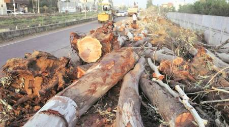 Himachal Pradesh HC, Himachal Pradesh HC on illegal felling of trees, Himachal Pradesh deforestaion, deforestation, indian express news