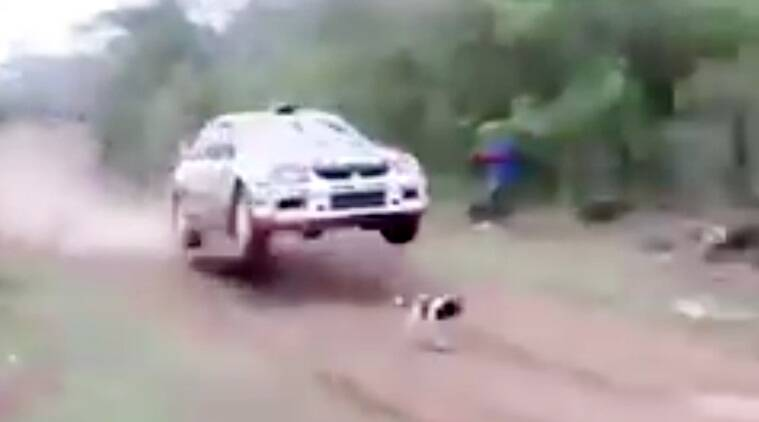 dog and car videos dog saved by driver, dog and a over speeding car, dangerous videos, Indian express, Indian express news