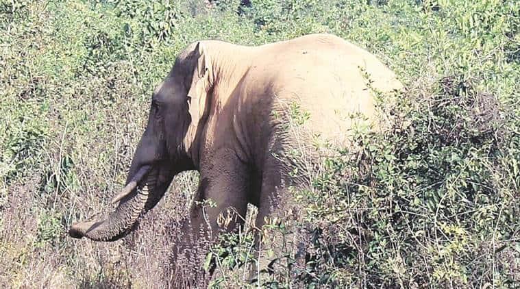 Hoshiarpur wildlife sanctuary, Takhni-Rahmapur Wildlife Sanctuary, Wildlife Sanctuary, Sanctuary, India News, Indian Express, Indian Express News