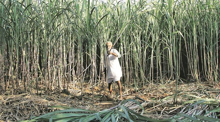 Congress targets BJP On Farm Loan Waiver, Maharashtra Farm Loan Waiver, BJP, Congress, Maharashtra News, Indian Express News