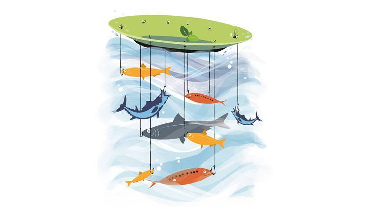 Fish population in Indian seas, fish population in India, Indian fisheries, India's fish stock, Illegal fishing, illegal practices for fishing, Living Blue Planet Report, breeding of fishes in India, Latest news, India news, National news,