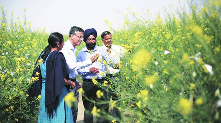 Genetically Modified Crops, GM Mustard