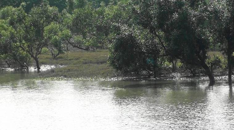 Sunderbans, Sunderban protection, BSF Sunderban protection, Mangrove Protection, Indian express