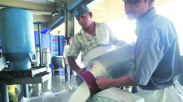 Maharashtra milk procurement prices, Maharashtra news