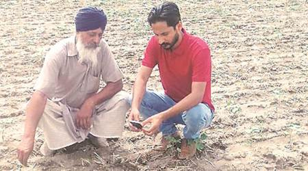 Area under cotton cultivation up in Punjab, but late sowing a worry