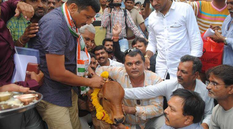 congress, cow pooja, cow progeny, rajkot, rajkot municipal corporation, congress-bjp, RMC meeting, indian express