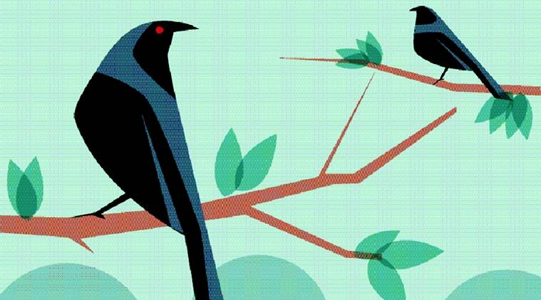 birds, animals, jungles, wild life, eye stories, indian express, indian express news