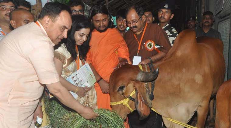 subramanian swamy. modi, india, centre, cow sluaghter, beef ban, bjp, congress government, subramanian swamy, modi government, india news, indian express news