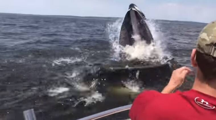 whale videos, scary animal videos, viral animal videos, whales attacks a boat videos, indian express, indian express news