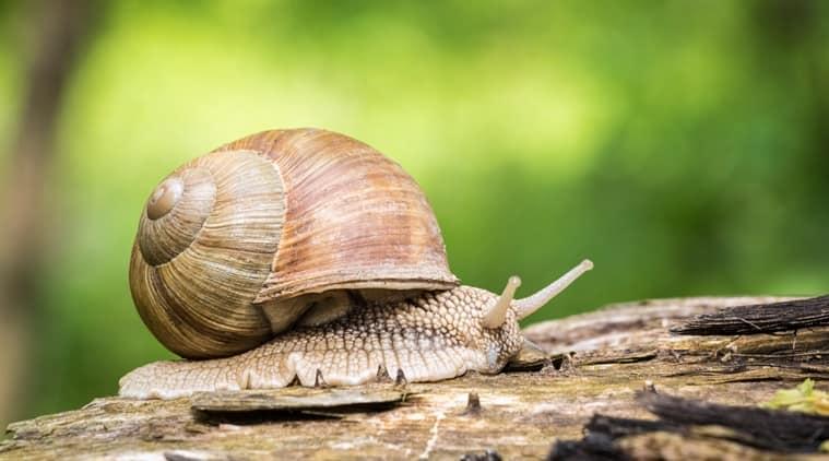 snail secretion cosmetics
