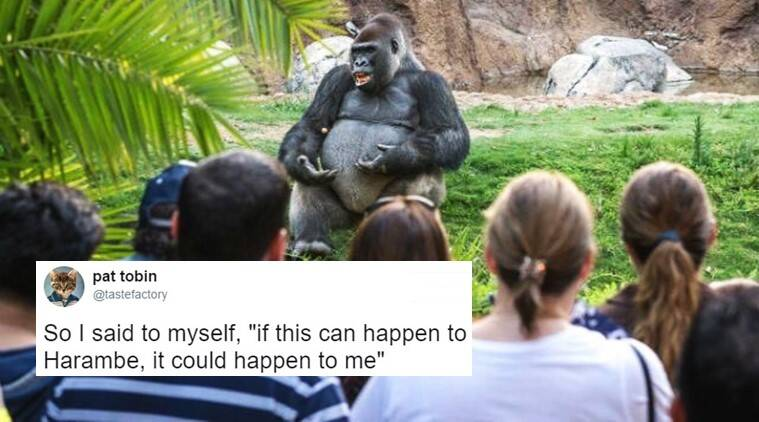 gorilla giving ted talk, gorilla ted talk memes, gorilla ted talk funny, gorilla funny memes, gorilla harambe twitter memes, gorilla te talks funny, gorilla ted talks funny internet memes, indian express, indian express news