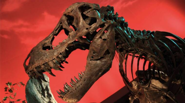 Jurassic Park,Tyrannosaurus rex bone, palaeontologists, dinosaur bone protein, Dinosaur, Dinosaur fossils