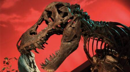 T-Rex bone protein proves Jurassic Park will never exist, claimsstudy