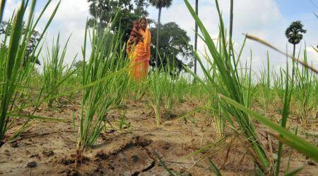 Bihar: 48 per cent rain deficit, 35 districts stare at drought