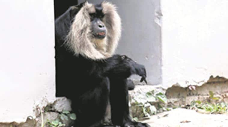 Chhatbir Zoo news, india news, indian express news