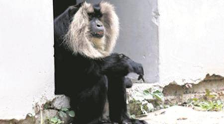 Chhatbir zoo: Ageing & lonely, Meet zoo's oldestinmate