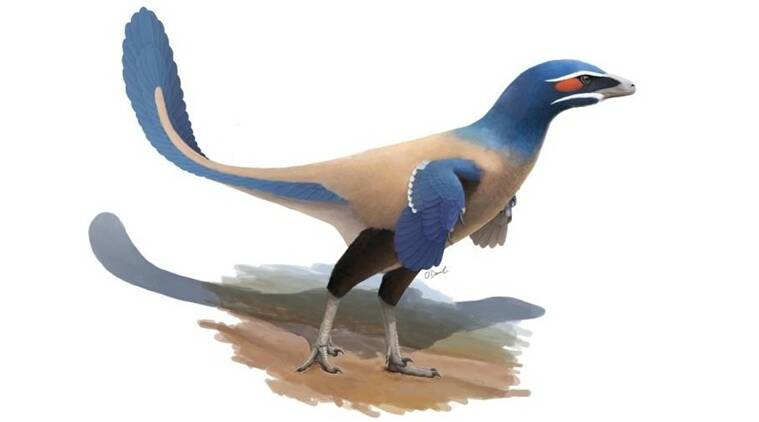 New bird-like species of dinosaur identified