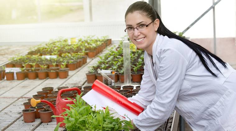 BSc agriculture, agriculture courses, bsc, science courses, agriculture, science courses india, education news, indian express,