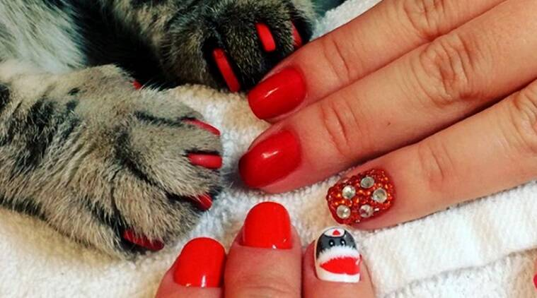 cat manicure, matching cat manicures, bizarre manicure trends, manicure trends, cat manicure photos, indian express, indian express news