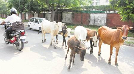 State legislatures have 'exclusive' powers to enact laws on cattle protection:Govt