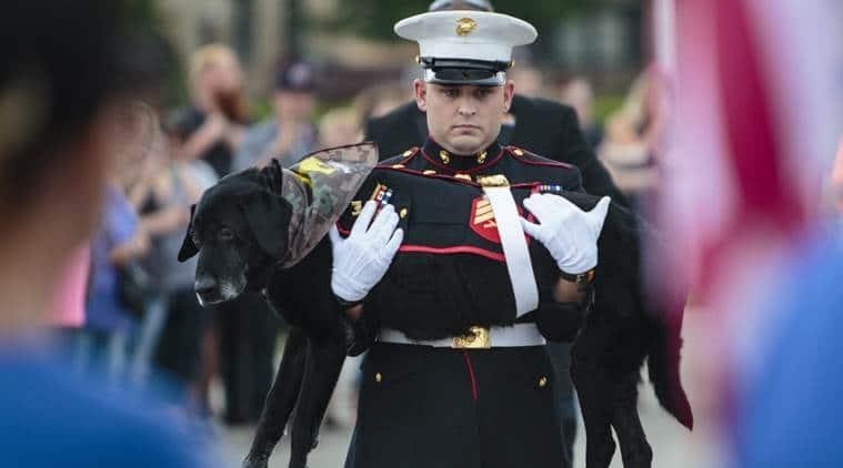 US Marine dog, Cena, Cena euthanasia, Marine dog cancer