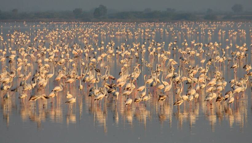 Kashmir Attracts Lakhs Of Migratory Birds As WinterApproaches