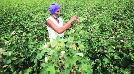 Vidarbha farmers death: 'Blaming death on pesticides campaign by NGOs'
