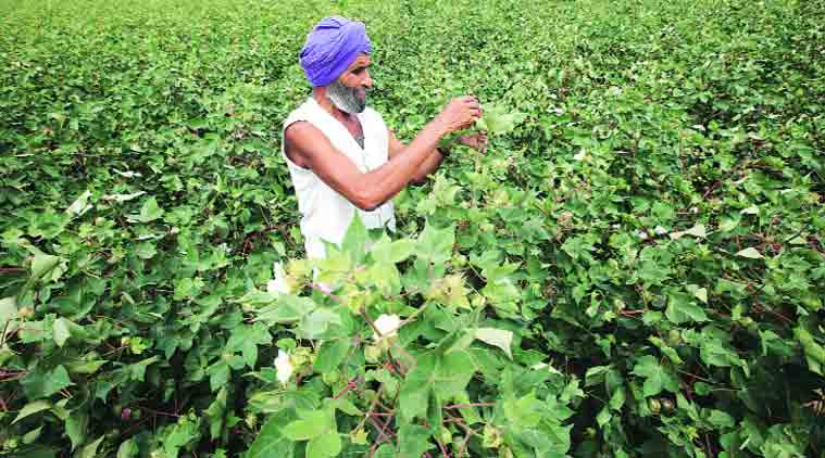 From 22 deaths to 0, how cotton district in Maharashtra battled pesticide poisoning