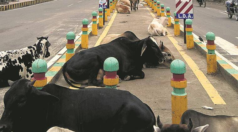 demolish cycle tracks, cycle track akhilesh yadav, yogi adityanath cycle track, adityanath akilesh yadav, indian express, india news, latest news