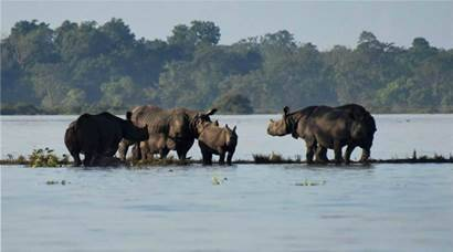 Assam floods submerge large parts of Kaziranga park, animals taken to safe places