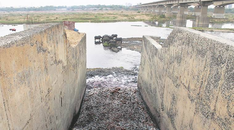 Ahmedabad Municipal Corporation, dead fish found in water bodies, Gujarat news, India news, National news