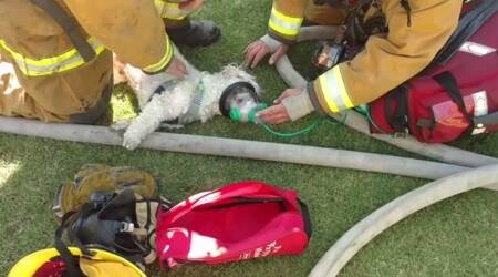 WATCH: Firemen rescuing a puppy from a burning house will reinstate your faith in humanity
