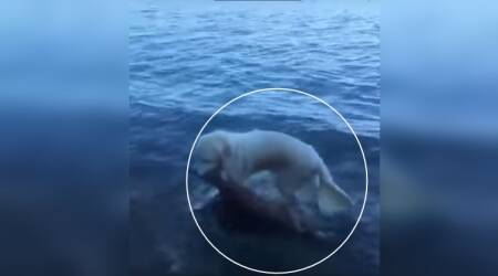 Watch: HEROIC dog SAVES a baby deer from drowning