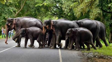 At 27,000, elephant population in India 'stable' since 2012:Experts