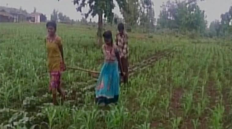 Financial crisis forced farmer to use his daughters to plough field