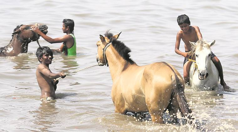 14 horses, infected with glanders, die; serosurveillance stepped up